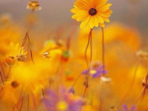 Amarillo Feliz